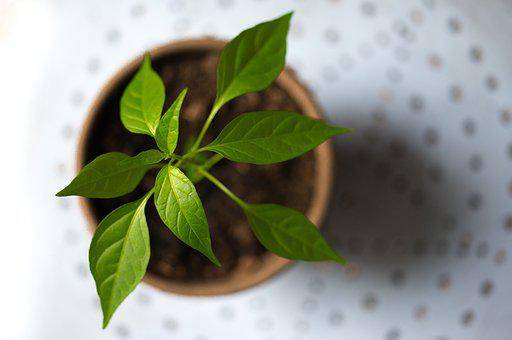 Young, Plant, Green, Pot, Spring, Nature, Leaf, Growing
