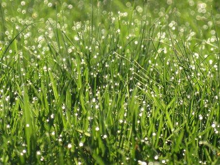 Grass, Fresh, Green, Lawn, Meadow, Summer, Growth