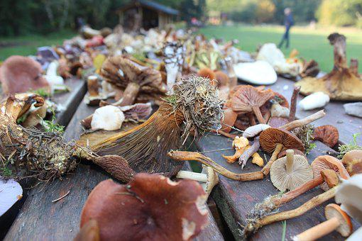 Mushrooms, Autumn, Thanksgiving, The Seasons Change