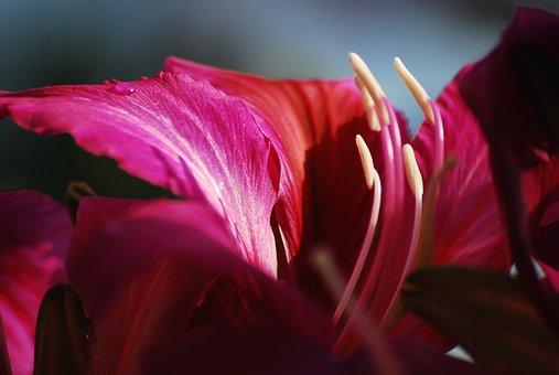 Nature, Flower, Petals