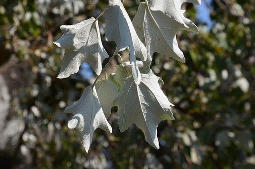 Summer, Leaves, White, Green, Nature, Plant