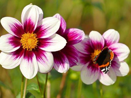 Flowers, As Lien, White, Purple, Plant, Garden