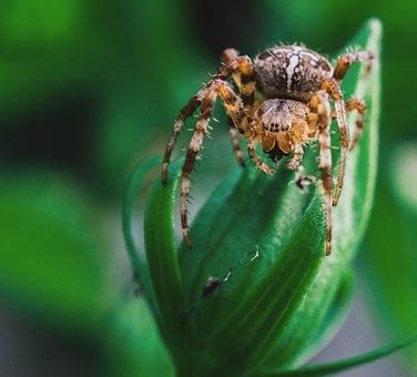 Spider, Animal, Arachnid, Cobweb, Creepy, Flower