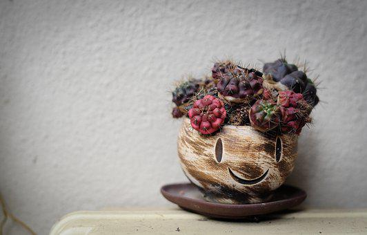 Smile, Happy, Plants, Succulent