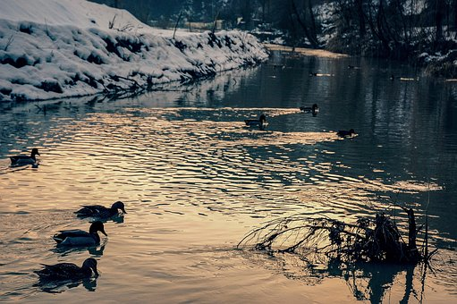 Ducks, Birds, Torrent, Winter, White, Water, Snow
