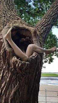 Tree, Legs, Woman