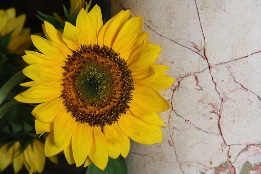 Yellow, Sunflower, Plant, Yellow Flower, Lean