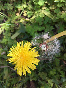 Wild, Yellow Flower, Flowers, Yellow, Wild Flowers