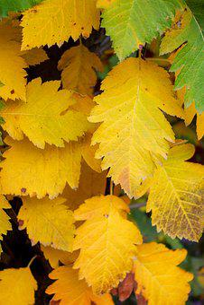Leaves, Autumn, Golden Autumn, Fall Colors