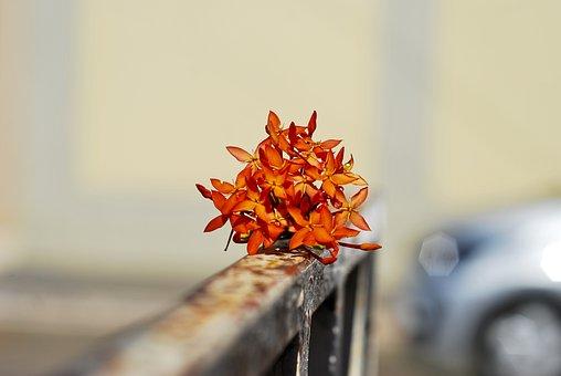 Flower, Blurred Background, Delicate, Blurred, Flowers