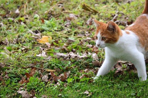 Cat, Kitten, Feline, Pet, Animal, Kitty, Field, Grass