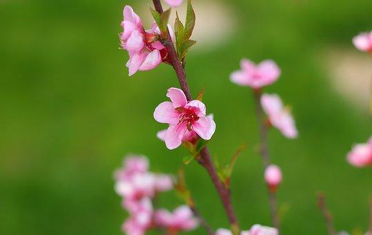 Flower, Plant, Nature, Spring, Garden, Bloom, Closeup