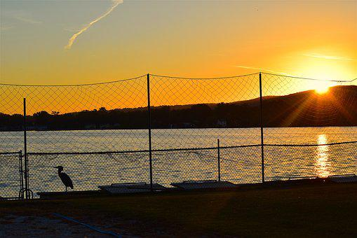 Sunset, Lake, Water, Fence, Silhouette, Bird, Heron