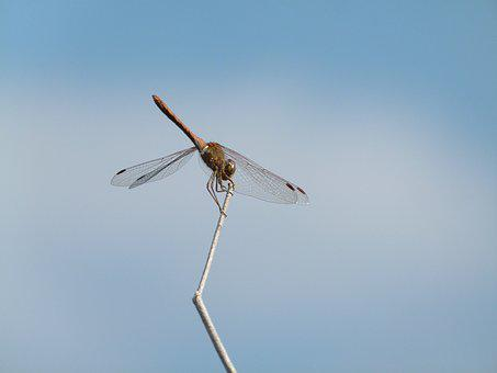 Dragonfly, Stem, Sky, Yellow Dragonfly