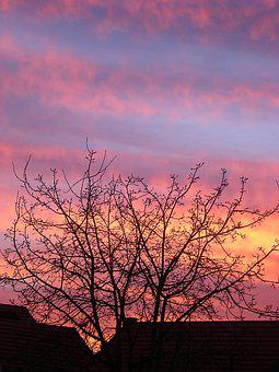 Evening, Sky, Tree, Clouds, Sunset, Fall, Yellow, Pink