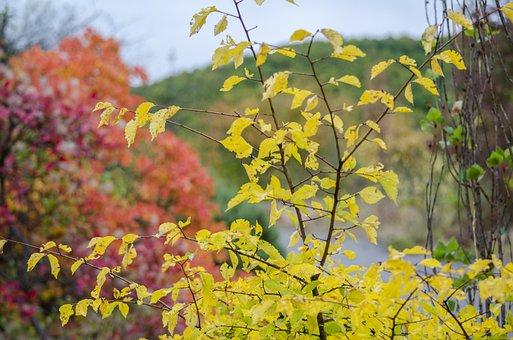 Autumn, Nature, Autumn Nature, Yellow Leaves