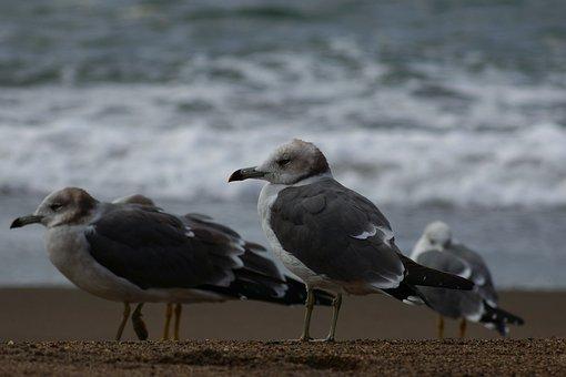 Animal, Sea, Beach, Wave, Seabird, Sea Gull, Seagull