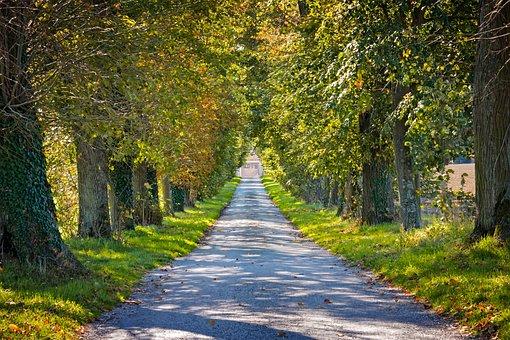 Autumn, Avenue, Away, Tree Lined Avenue, Landscape