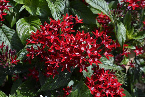 Red Flowers, Leaves, Botanical Garden, Bloom, Blossom
