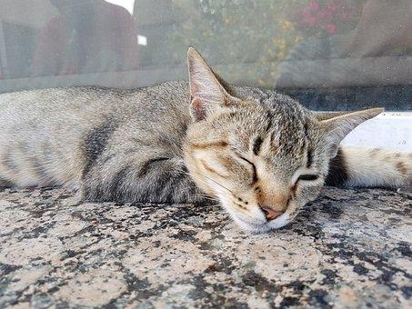 Siesta, Cat, Dream, Rest, Calm, Ears