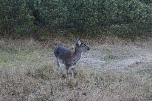 Deer, Nature, Expensive, Game, Close On