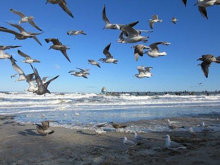 Baltic Sea, Zingst, Gulls