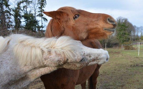 Horses Play, Heads Horses, Profiles Heads, Horse