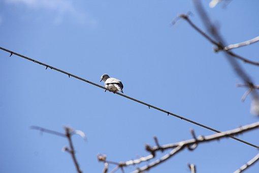 Dove, Bird, Lines, Sky