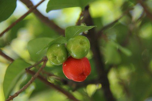 Acerola, Fruit, Power Supply, Nature