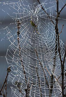 Spider Web, Spider, Dew, Insects, Morning Dew, Network