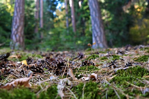 Forest, Perspective, Forest Floor, Autumn Forest, Tap