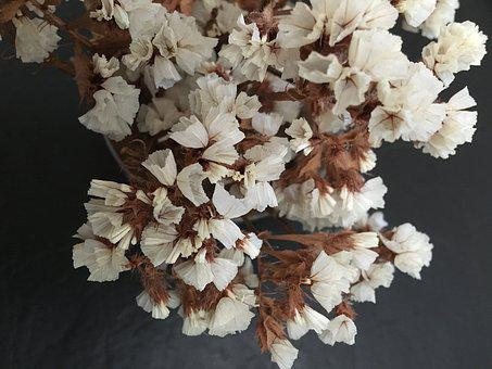 Dry Flower, Artificial, Small Flowers, Nature