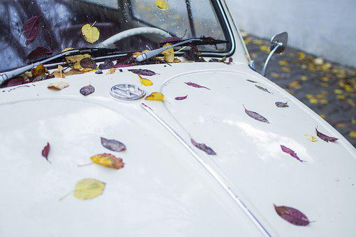 Leaves, Car, Leaf, Green, Symbol, Volkswagen, Autumn