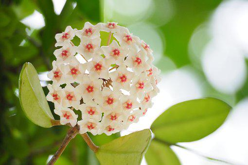Taiwan, Taipei, Botanical Garden, Cones Blue, White