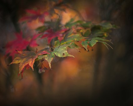 Autumn, Sheet, Red, Green, Nature, Fall Colors, Garden