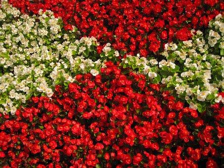 Flowers, Background, Color, Summer, Macro, Desktop