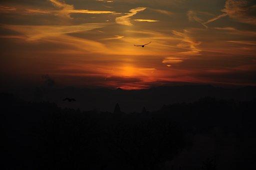 Sunrise, Bird, Clouds