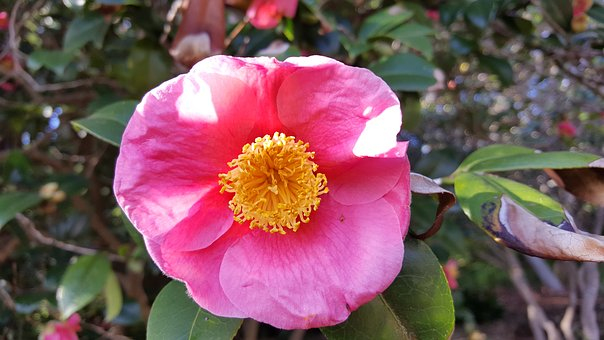Blossom, Bloom, Flower, Turkey, Nature, Plant, Close