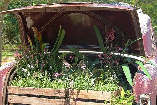 Vintage Car With Plants In Boot, Car, Old, Red, Faded
