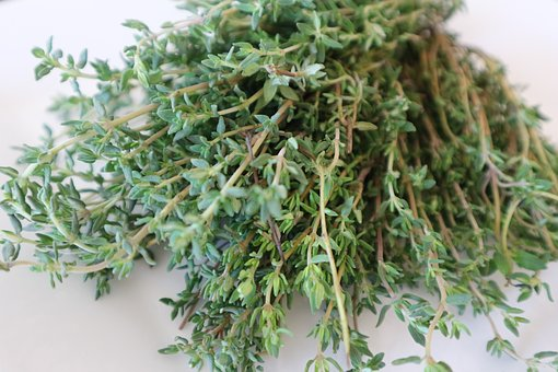 Thyme, Medicinal Herb, Cook, Spice, Nature