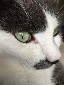 Great Cat, Green Eyes, Cute, Cat, Green, Animal, Eyes