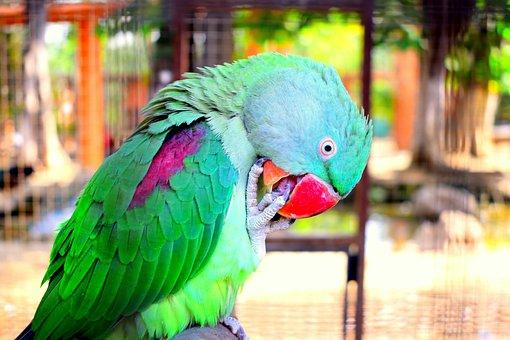 Parrot, Birds, Design, Colorful, Wildlife, Jungle, Cute