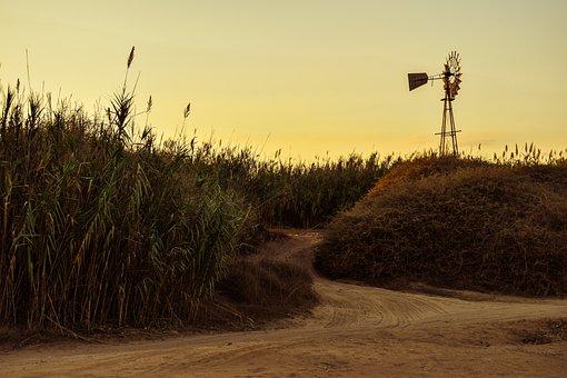 Cyprus, Kapparis, Dirt Road, Reeds, Windmill