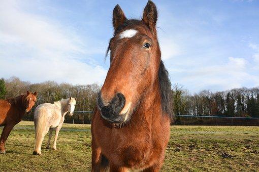 Horse, Head Face, Next To Horse, Equines, Herbivore