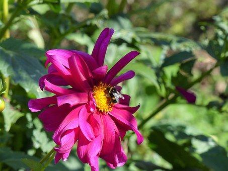 Summer, Garden, Flower, Insect, Close, Flora