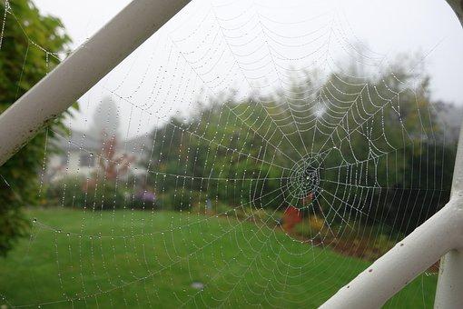 Cobweb, Garden, Dew, Fog, Close, Network, Animal World