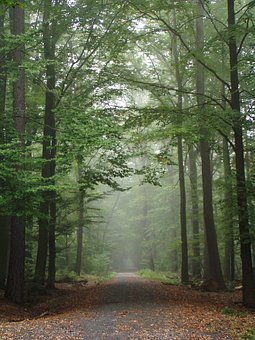Forest, Trees, Away, Nature, Autumn, Mood, Trail