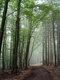 Forest Path, Forest, Trees, Away, Nature, Autumn, Mood