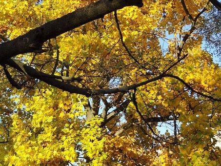 Autumn, Nostalgia, Trees, Beauty, Colors, Golden
