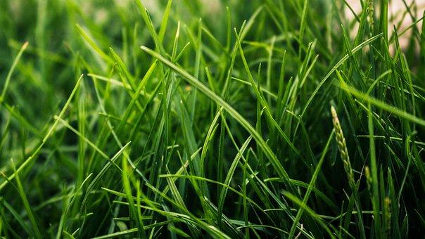 Grass, Green, Nature, Green Grass, Meadow, Plant, Field